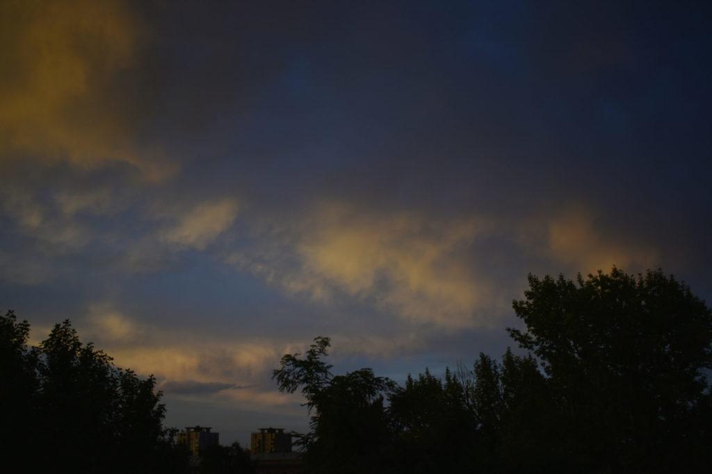 Poplars and sunset.